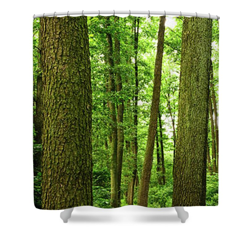 Scenics Shower Curtain featuring the photograph Footpath Between The Trees by Tomchat
