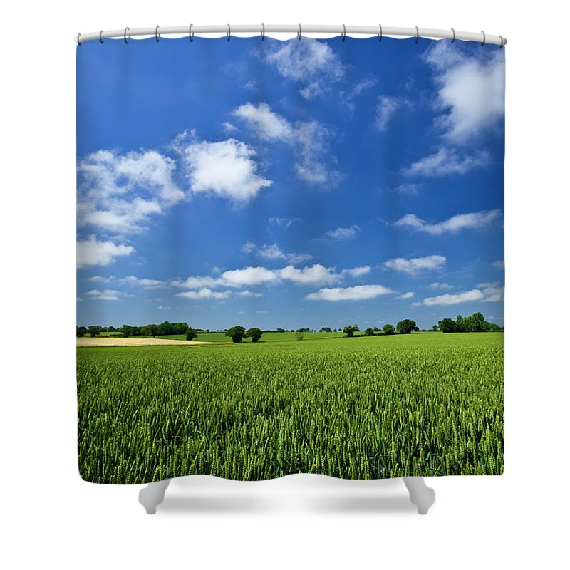 Environmental Conservation Shower Curtain featuring the photograph Fresh Air. Blue Skies Over Green Wheat by Alvinburrows