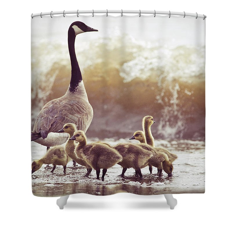 Lake Ontario Shower Curtain featuring the photograph Gaggle by Photogodfrey