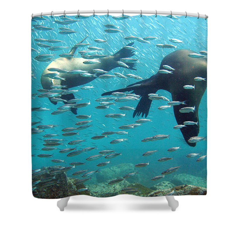 Underwater Shower Curtain featuring the photograph Galapagos Sea Lion by Bettina Lichtenberg