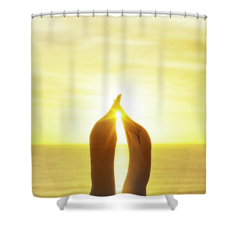 Care Shower Curtain featuring the photograph Gannets Greeting Each Other Between by Jason Hosking