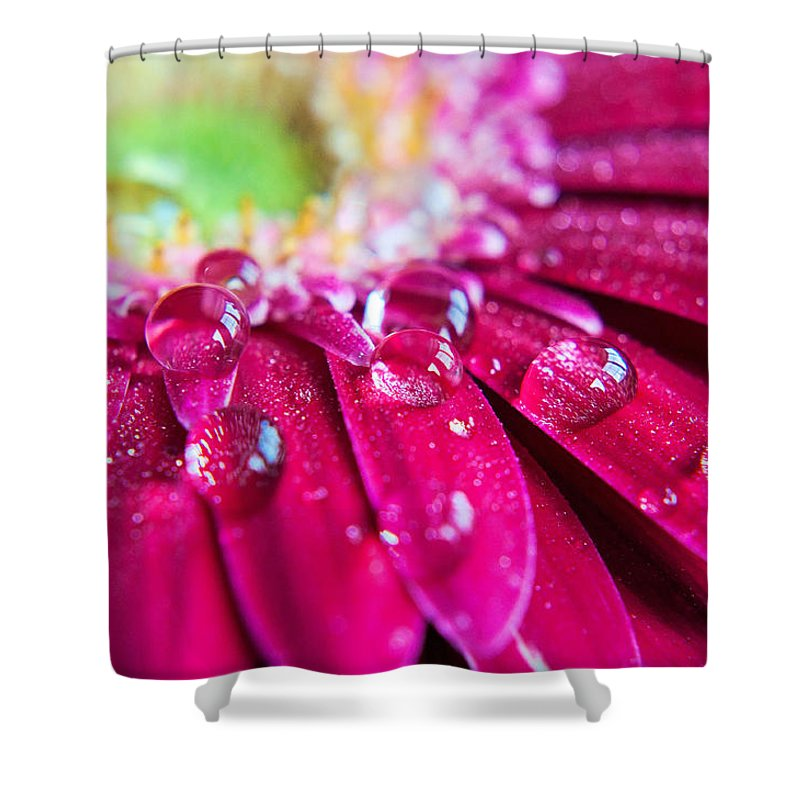 Petal Shower Curtain featuring the photograph Gerbera Rain Droplets by Michelle Mcmahon