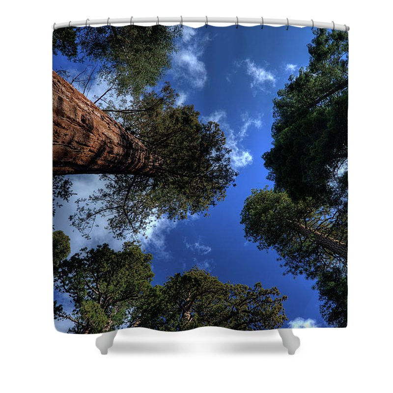 Sequoia Tree Shower Curtain featuring the photograph Giant Sequoias - 2 by Rhyman007