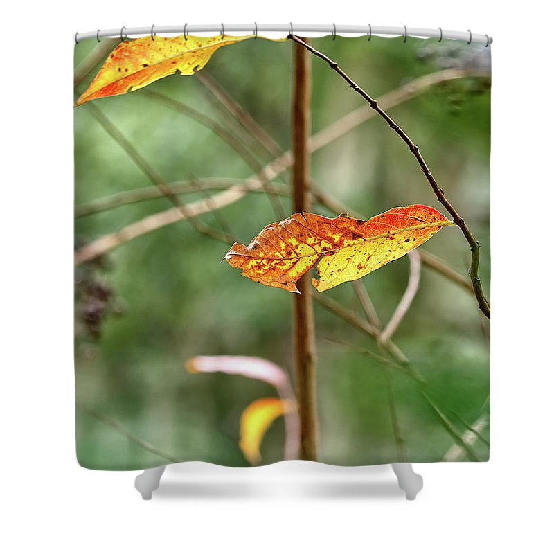 Nature Shower Curtain featuring the photograph Gold Leaves And Branches by Richard Rizzo