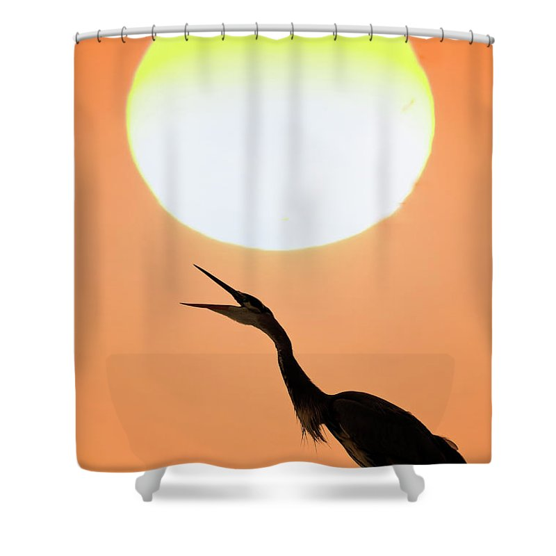 Animal Themes Shower Curtain featuring the photograph Great Blue Heron, Screeching, Sunset by Mark Newman
