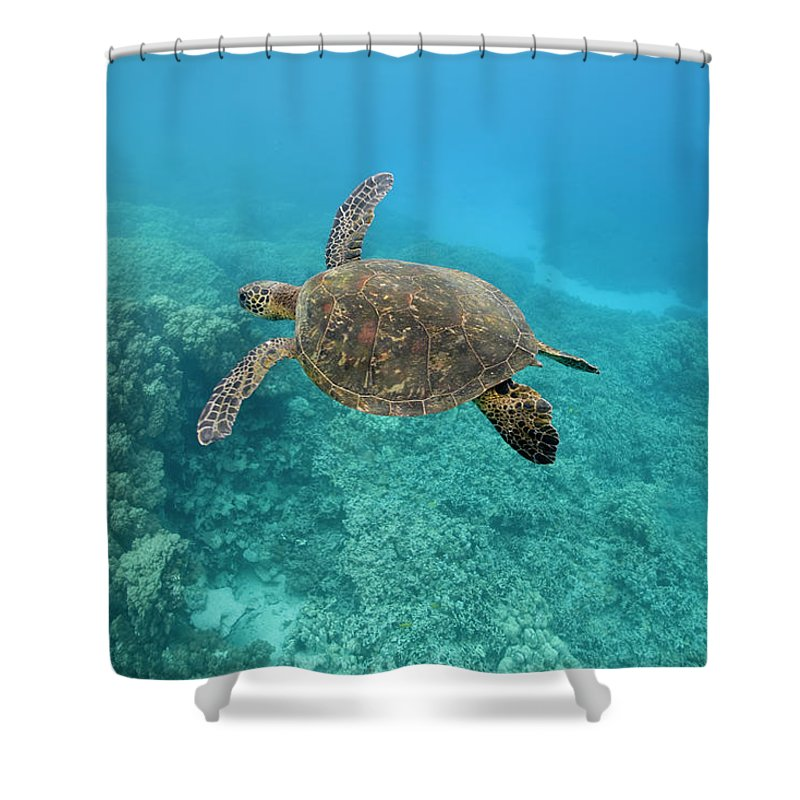 Underwater Shower Curtain featuring the photograph Green Sea Turtle, Big Island, Hawaii by Paul Souders