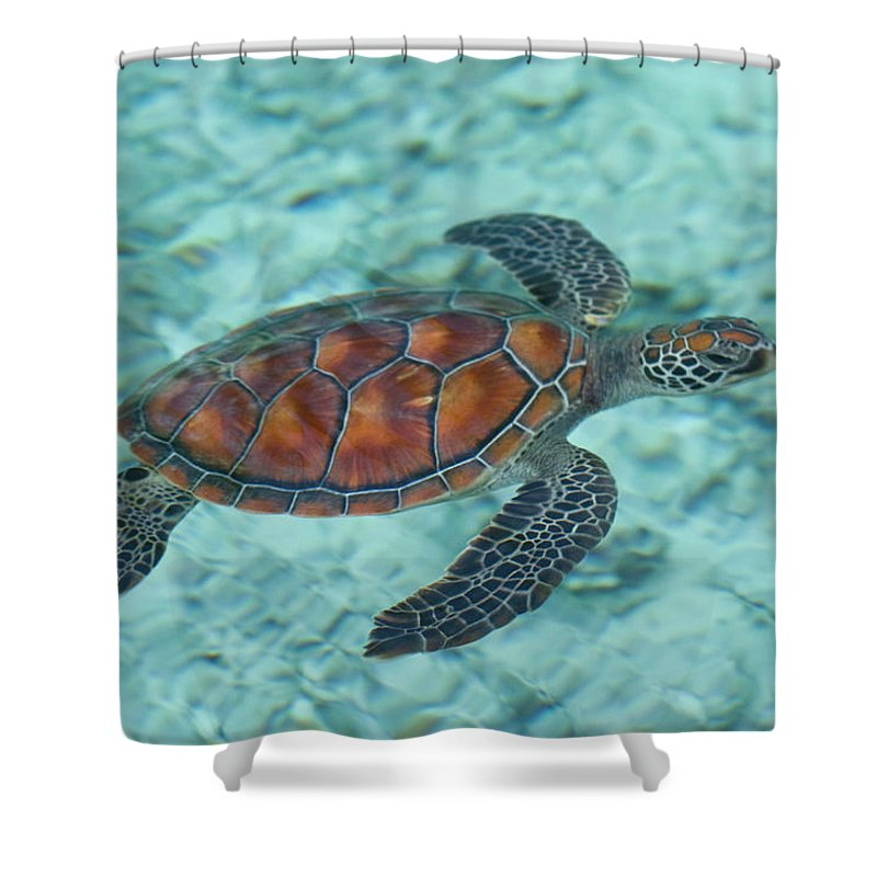Underwater Shower Curtain featuring the photograph Green Sea Turtle by Mako Photo