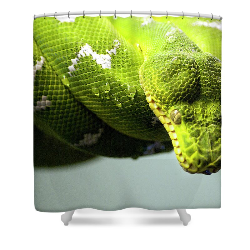 Toronto Shower Curtain featuring the photograph Green Snake Curled And Resting by Gail Shotlander