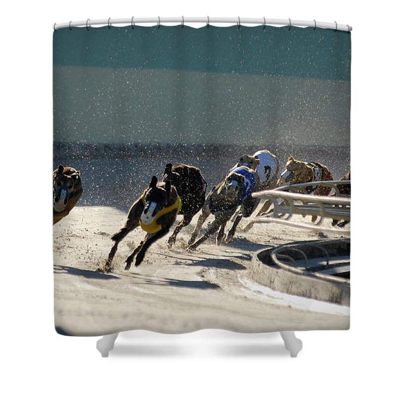 Dust Shower Curtain featuring the photograph Greyounds 3 Of 7 by Dplight