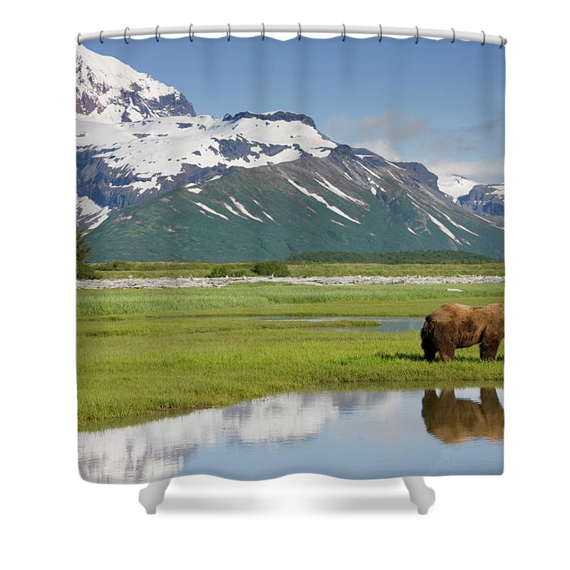 Brown Bear Shower Curtain featuring the photograph Grizzly Bear, Katmai National Park by Paul Souders