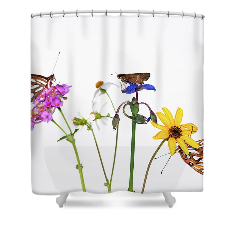 White Background Shower Curtain featuring the photograph Gulf Fritillary And Brown Skipper by Jim Mckinley