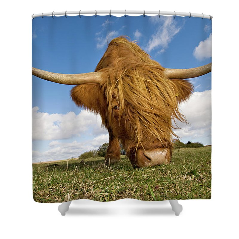 Horned Shower Curtain featuring the photograph Hairy, Horned, Highland Cow Grazing by Clarkandcompany