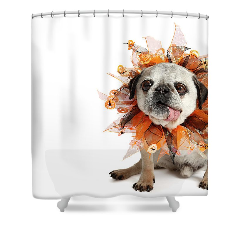 Pets Shower Curtain featuring the photograph Happy Halloween by Mlorenzphotography
