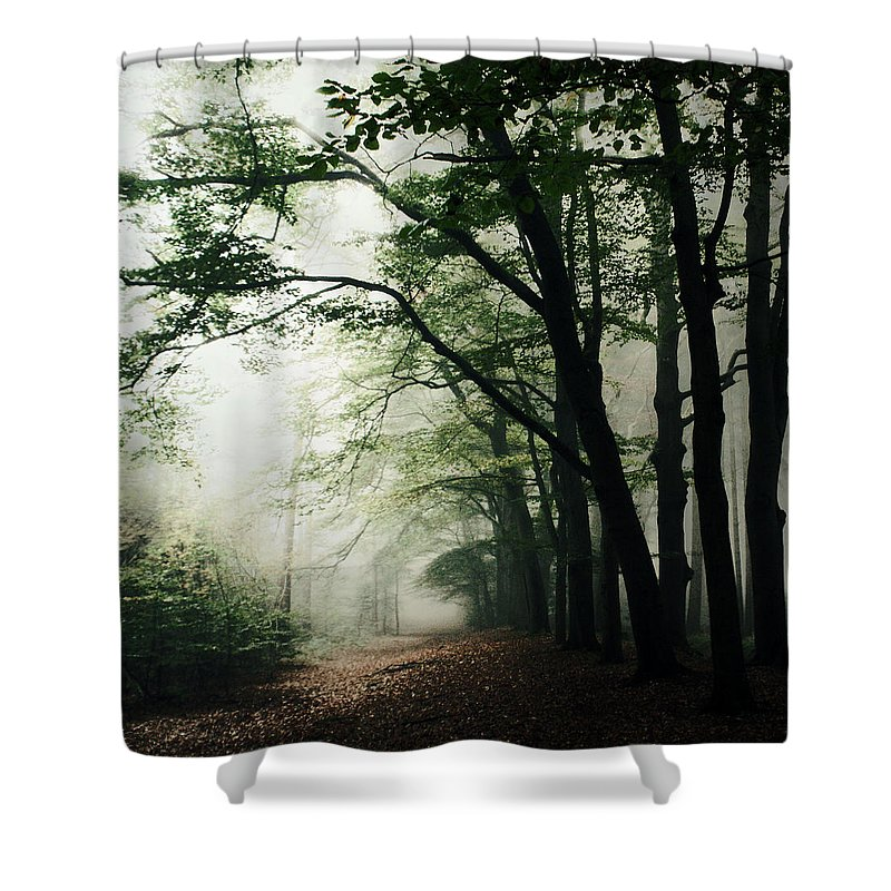 Scenics Shower Curtain featuring the photograph Haunted Forest by Bob Van Den Berg Photography