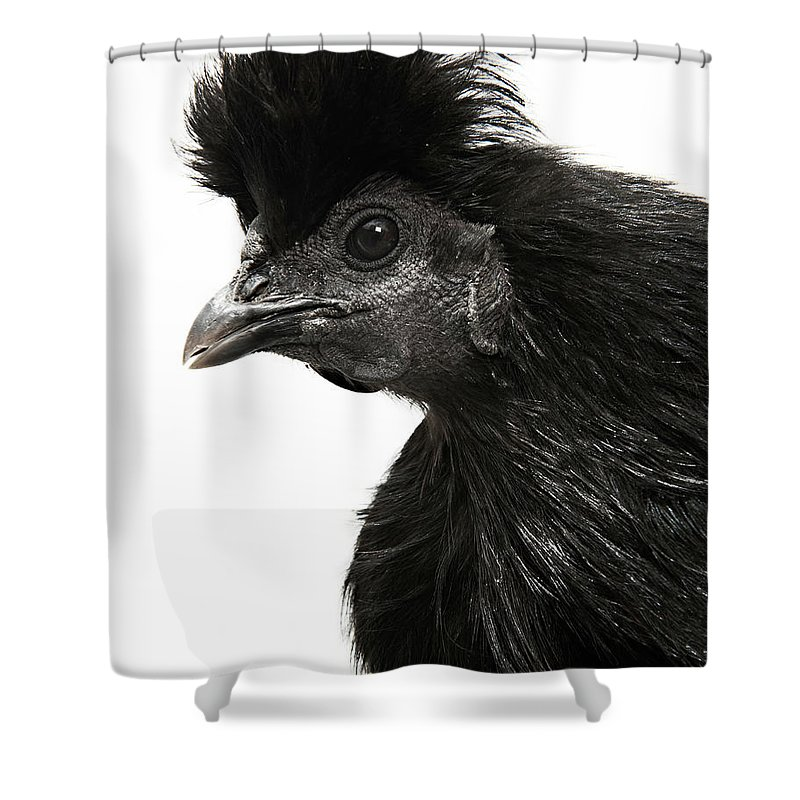 White Background Shower Curtain featuring the photograph Hen by Adrian Green