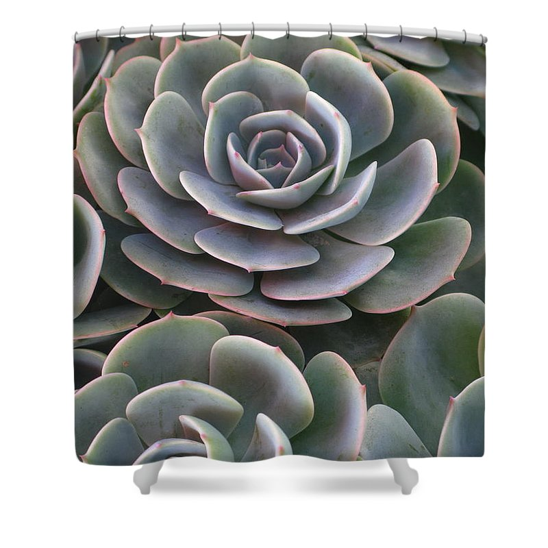 Scenics Shower Curtain featuring the photograph Hens And Chicks Plant Full Frame by Sassy1902