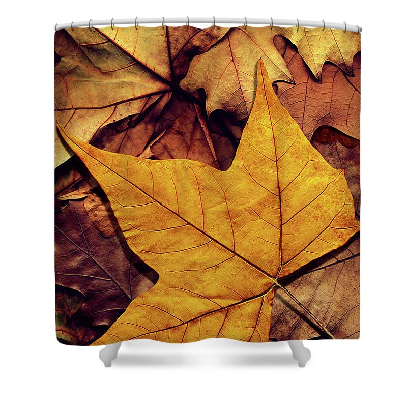 Orange Color Shower Curtain featuring the photograph High Resolution Dry Maple Leaf On by Miroslav Boskov