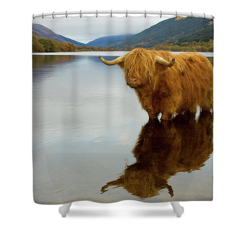 Horned Shower Curtain featuring the photograph Highland Cow by Empato