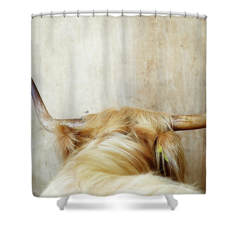 Horned Shower Curtain featuring the photograph Highland Cow, Rear View by Liz Whitaker