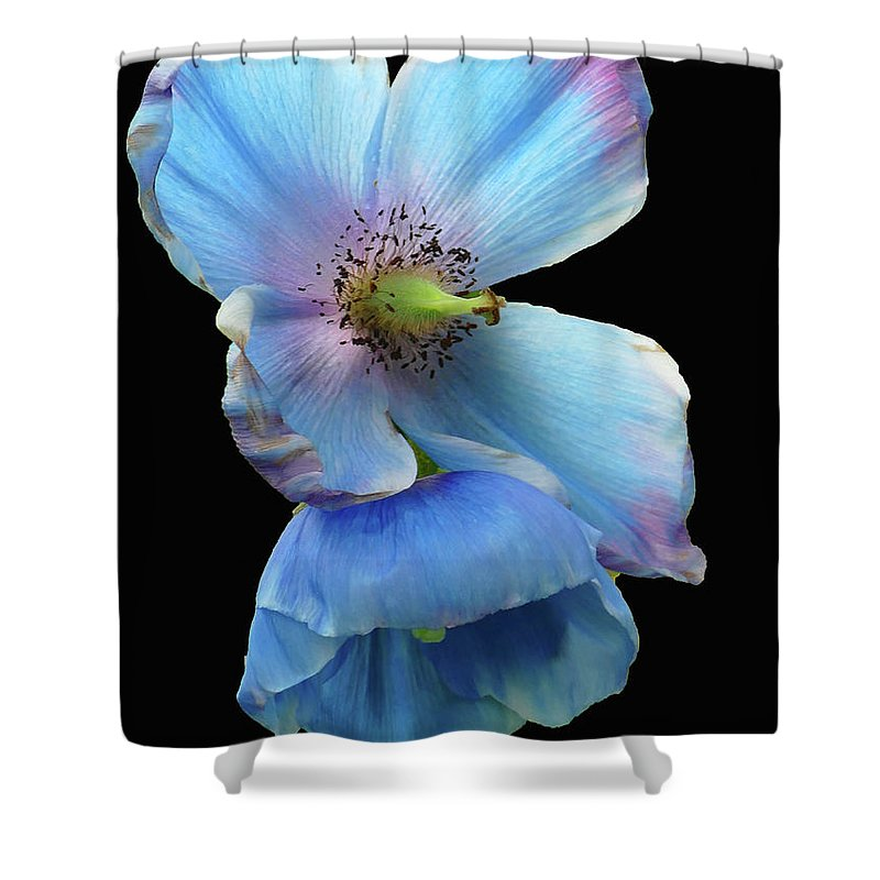 Flowers Shower Curtain featuring the photograph Himalayan Blue Poppy by Cindy Manero