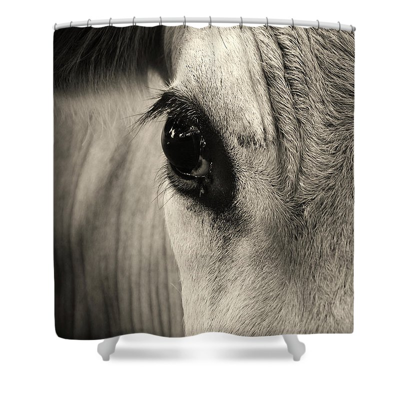 Horse Shower Curtain featuring the photograph Horse Eye by Karena Goldfinch