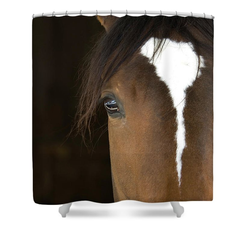Horse Shower Curtain featuring the photograph Horse Head by Rterry126