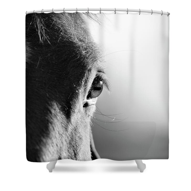 Horse Shower Curtain featuring the photograph Horse In Black And White by Malcolm Macgregor
