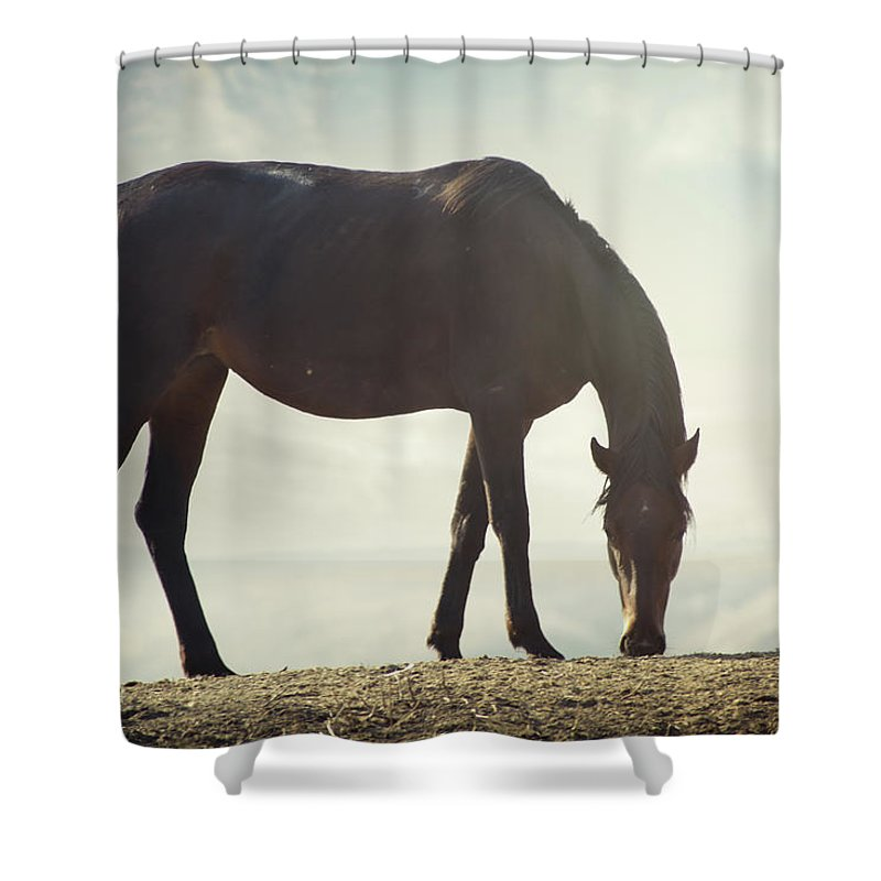 Horse Shower Curtain featuring the photograph Horse In Wild by Arman Zhenikeyev - Professional Photographer From Kazakhstan