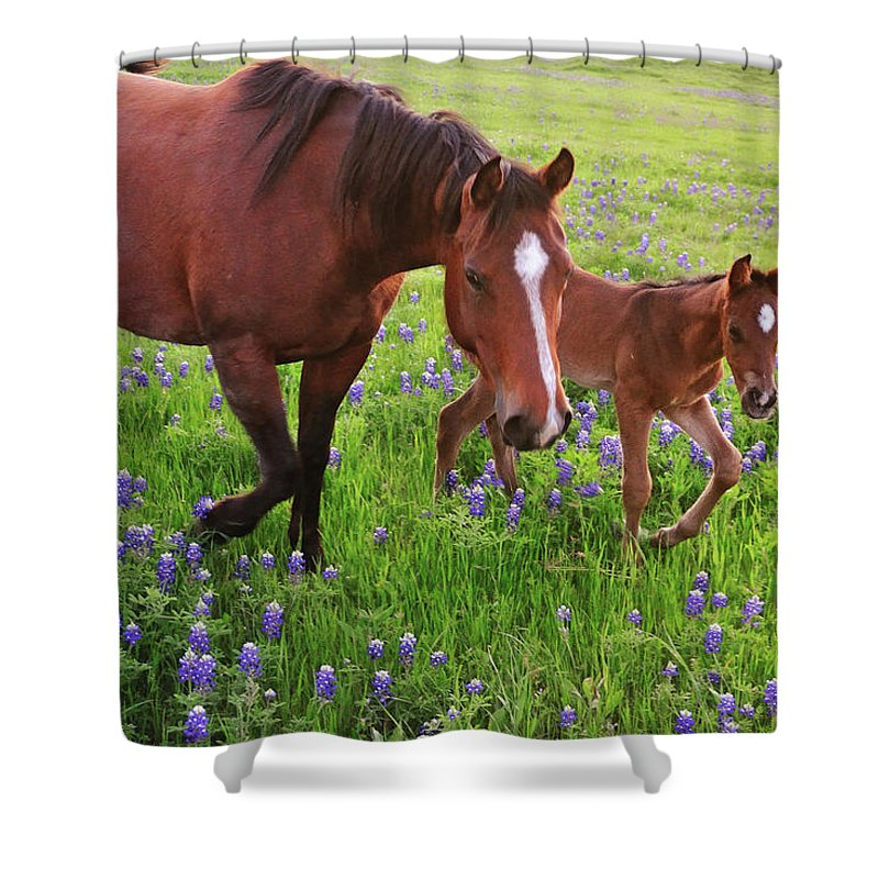 Horse Shower Curtain featuring the photograph Horse On Bluebonnet Trail by David Hensley