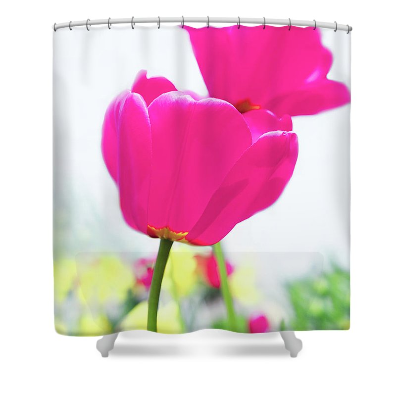 Hot Pink Shower Curtain featuring the photograph Hot Pink Prelude by Emily Johnson