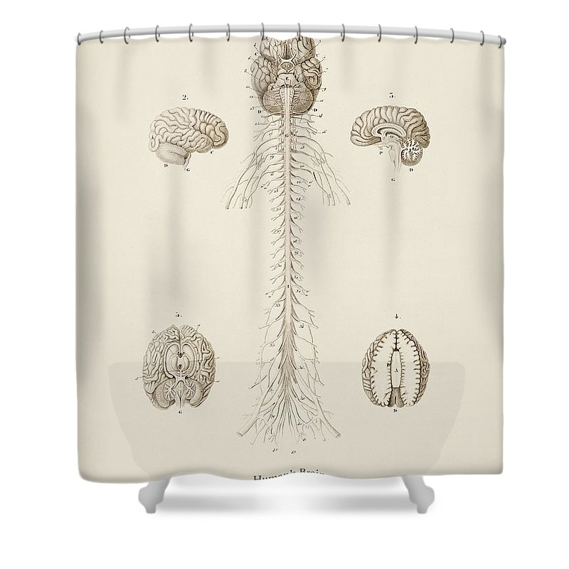 Nervous System Shower Curtains