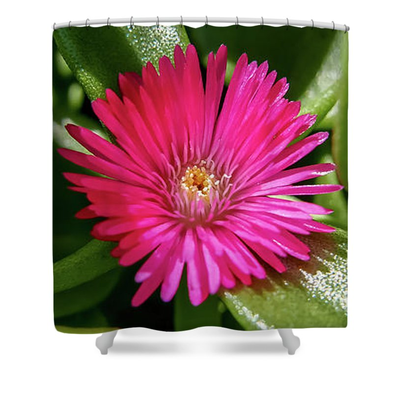 Tropical Flower Shower Curtain featuring the photograph Humble And Proud by Az Jackson