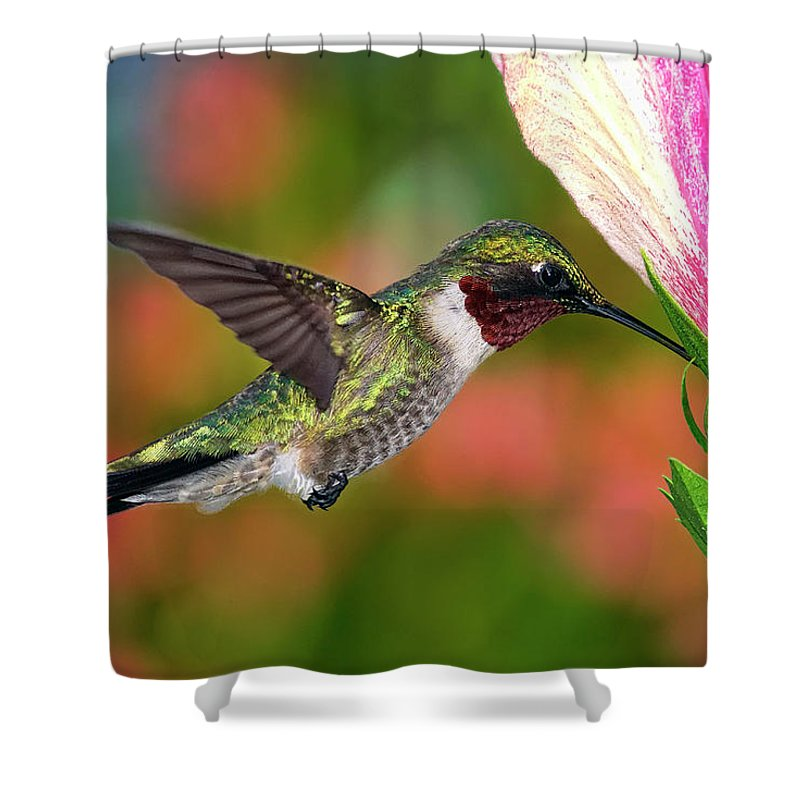 Animal Themes Shower Curtain featuring the photograph Hummingbird Feeding On Hibiscus by Dansphotoart On Flickr