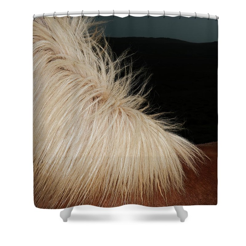Horse Shower Curtain featuring the photograph Icelandic Horse by Roine Magnusson