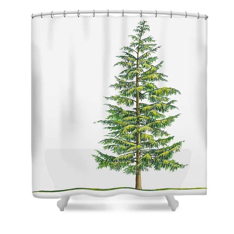 Watercolor Painting Shower Curtain featuring the digital art Illustration Of Large Evergreen Tsuga by Sue Oldfield