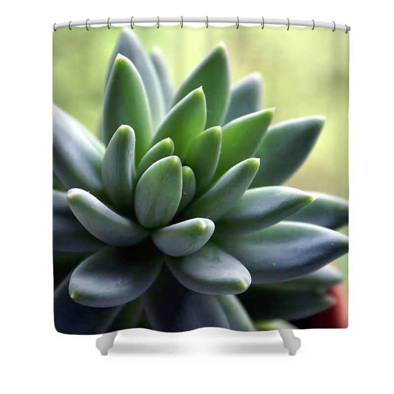 Agave Shower Curtain featuring the photograph In Focus View Of Green Houseplant With by Dorin s