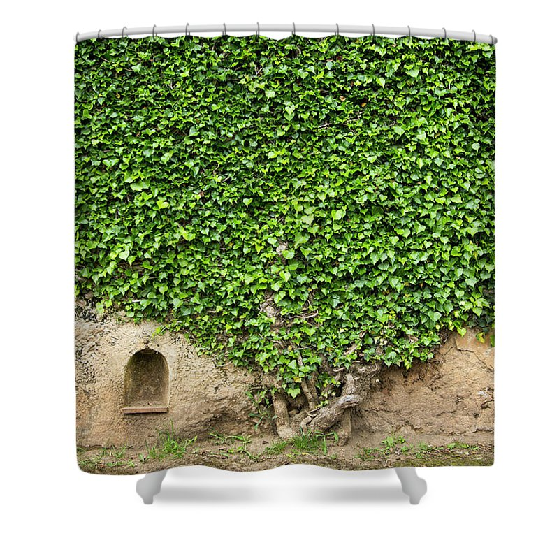 Arch Shower Curtain featuring the photograph Ivy On A Wall Of Villa Cimbrone, Ravello by Buena Vista Images