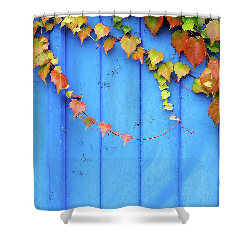 Architectural Feature Shower Curtain featuring the photograph Ivy On The Door by Zianlob