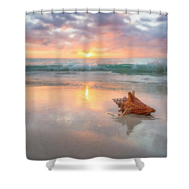 Nature Shower Curtain featuring the photograph Jamaica, Conch Shell On Beach by Tetra Images