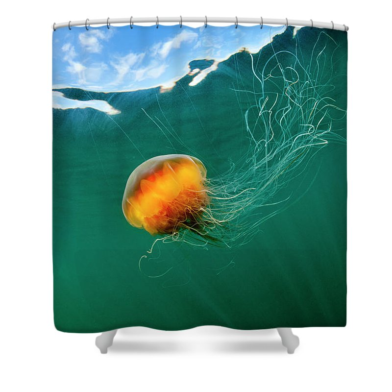 Underwater Shower Curtain featuring the photograph Jellyfish, Alaska by Paul Souders