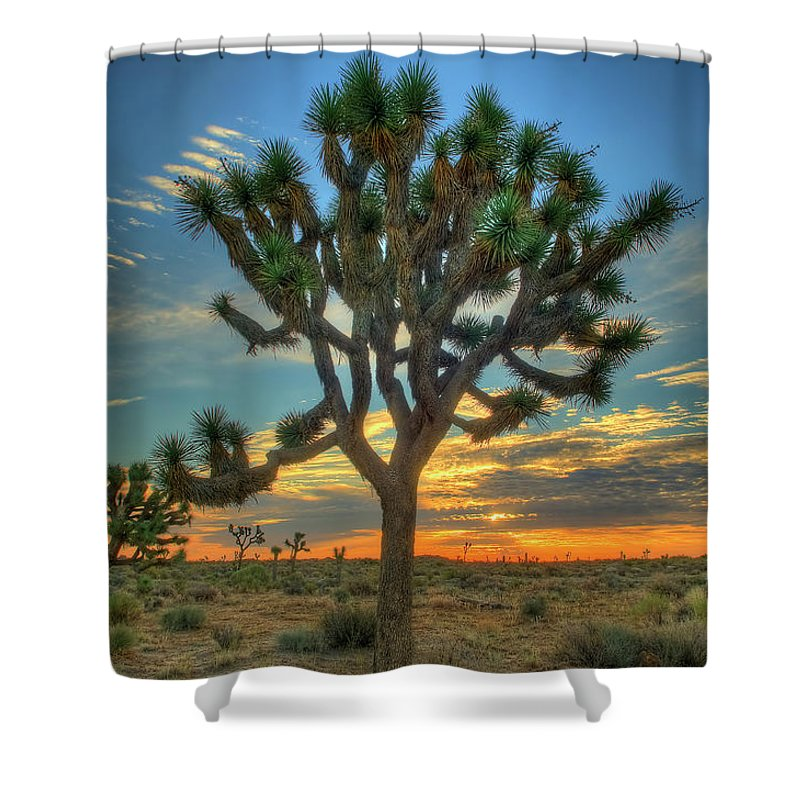 Scenics Shower Curtain featuring the photograph Joshua Tree At Sunrise by Photograph By Kyle Hammons