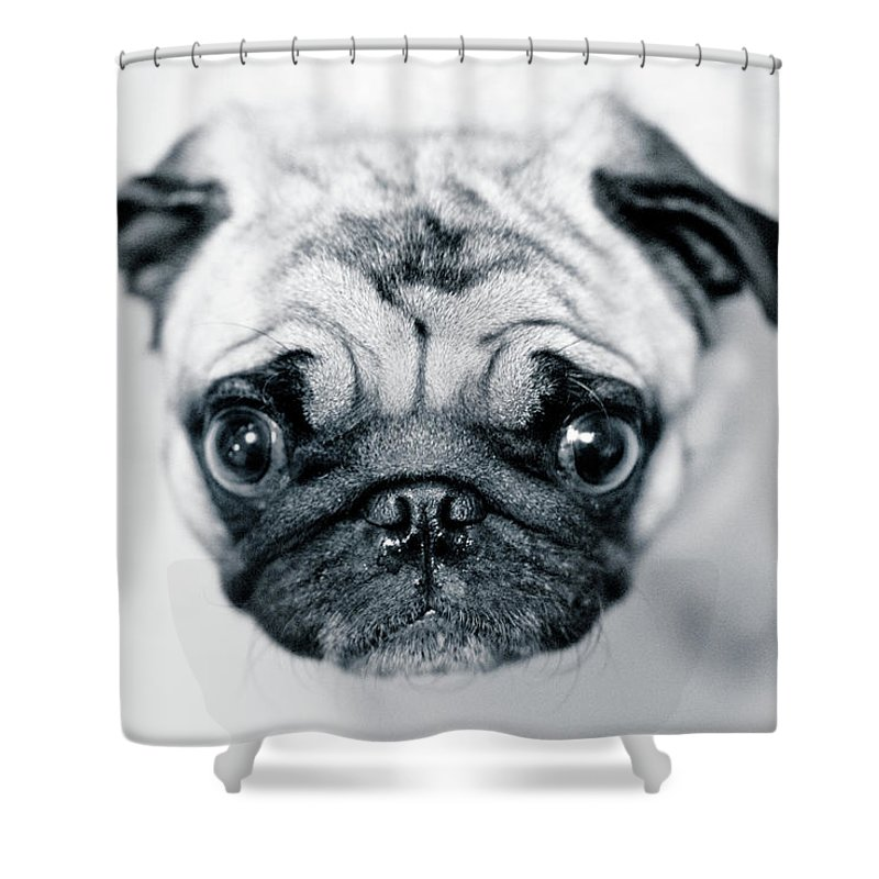 Pets Shower Curtain featuring the photograph Just Enough by Eddy Joaquim
