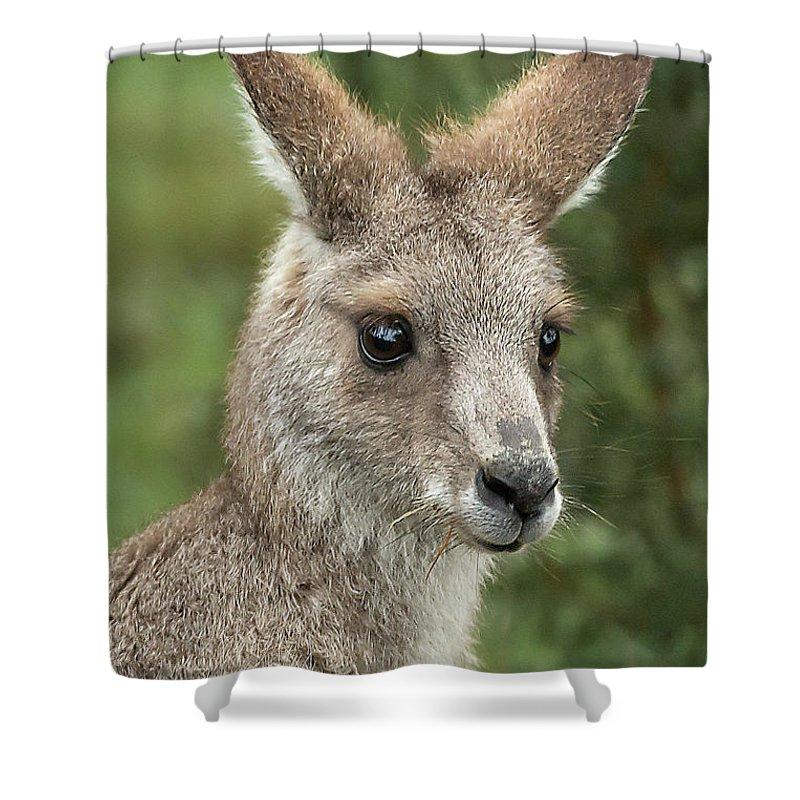 Kangaroo Shower Curtain featuring the photograph Kangaroo Up Close by Barry Kearney