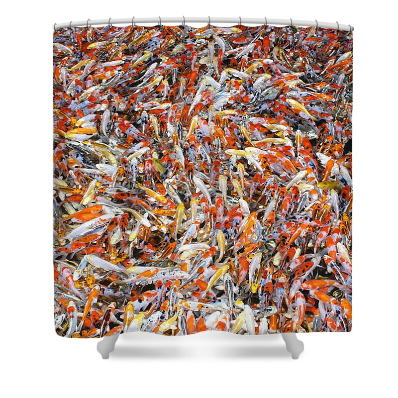 Pets Shower Curtain featuring the photograph Koi Jigsaw by Chris Edwards