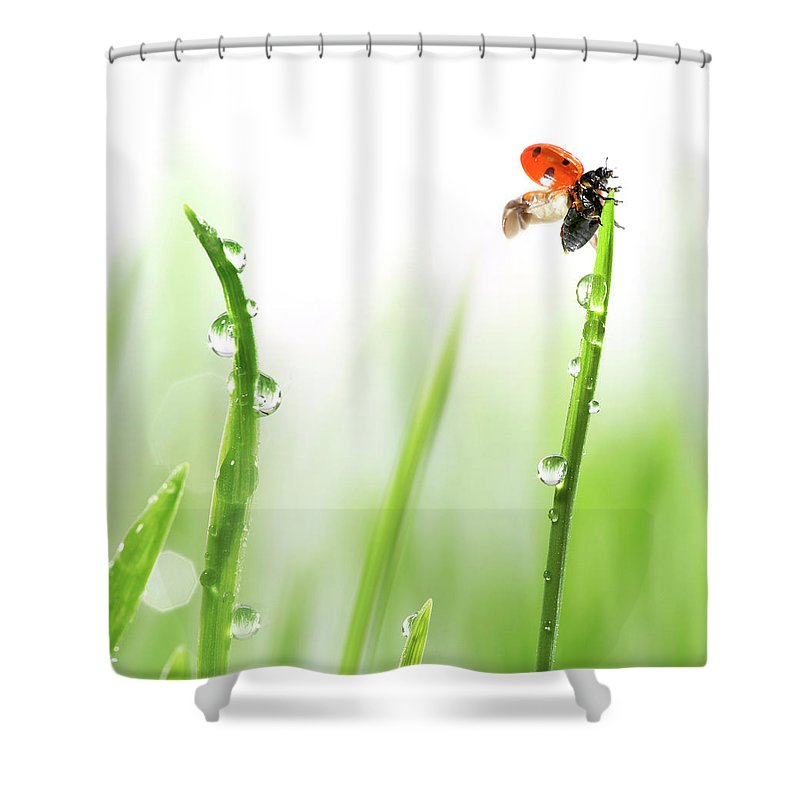 Hanging Shower Curtain featuring the photograph Ladybug On Green Grass by Sbayram