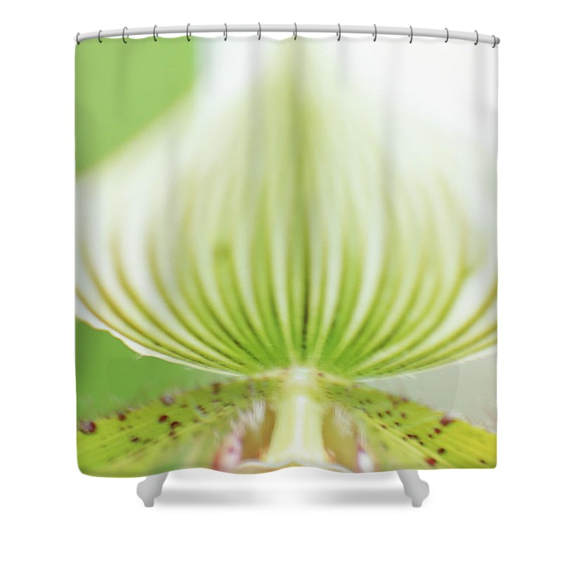 Single Flower Shower Curtain featuring the photograph Ladys Slipper Paphiopedilum Sukhakulii by Vera Storman