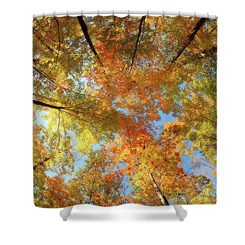 Canopy Shower Curtain featuring the photograph Langlade County Canopy by Todd Klassy