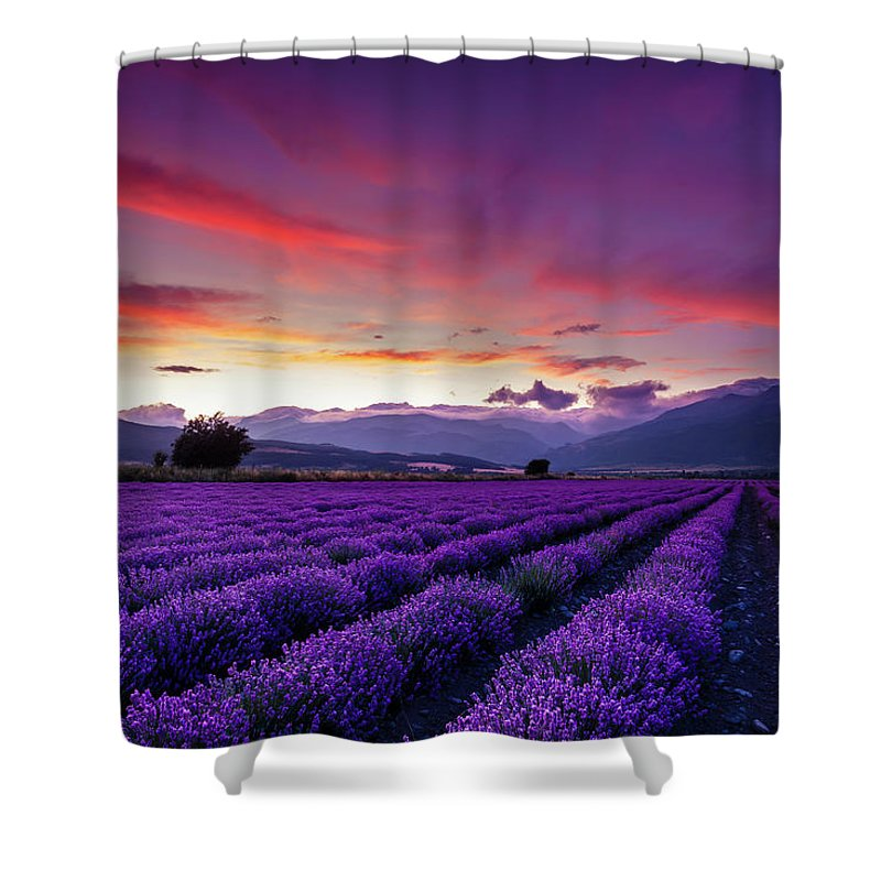 Dusk Shower Curtain featuring the photograph Lavender Season by Evgeni Dinev