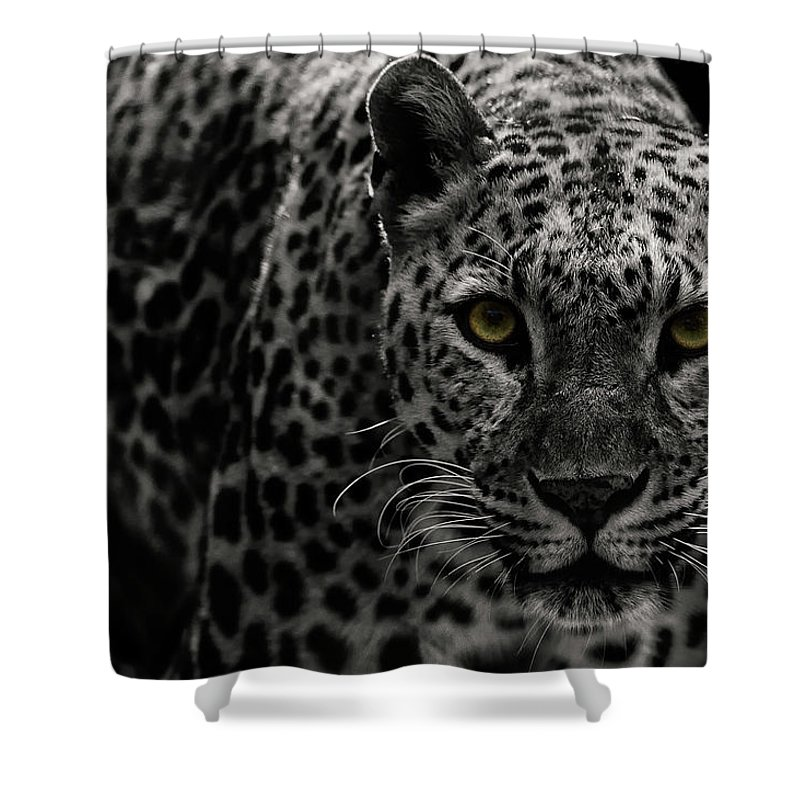 Big Cat Shower Curtain featuring the photograph Leopard by Somak Pal