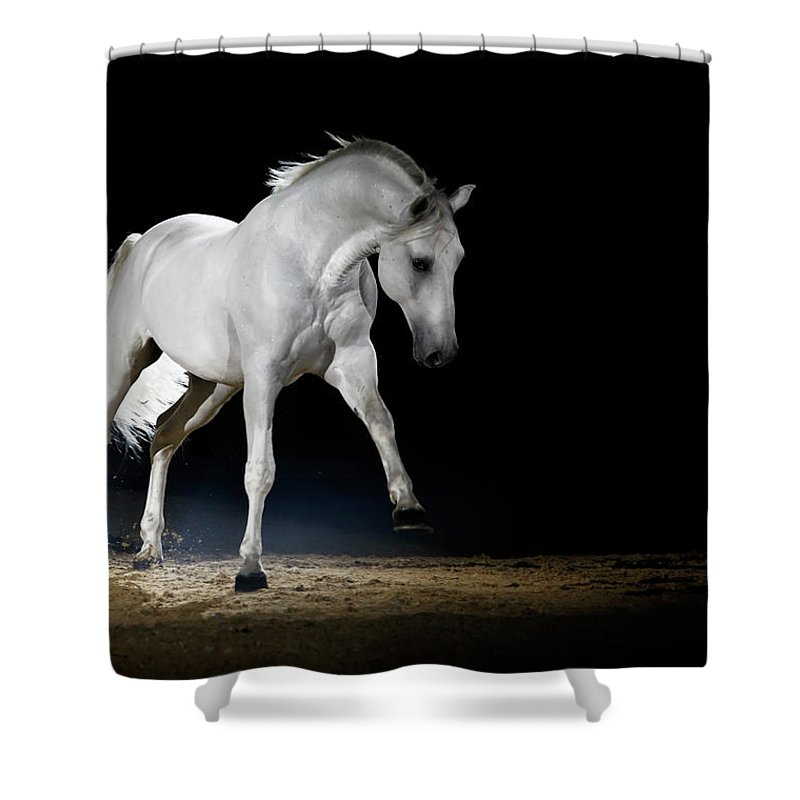 Horse Shower Curtain featuring the photograph Lipizzaner Horse Playing by Somogyvari